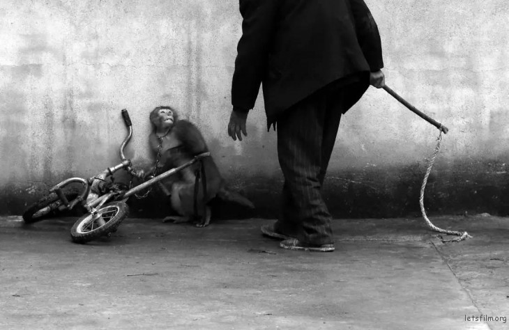 第 58 届荷赛奖自然类单幅一等奖  储永志「耍猴人」