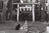 [11383] 猫 | Episode VI