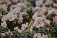 碎语 | 春天的病