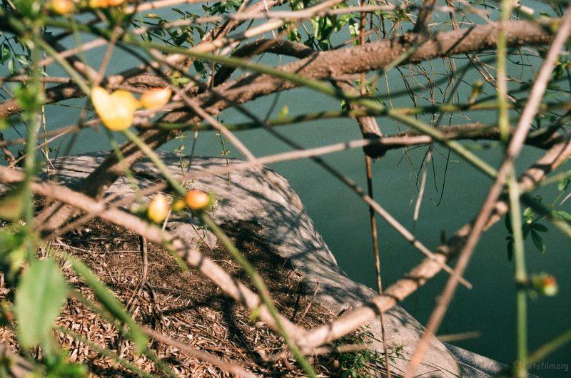 黄山湖公园的迎春