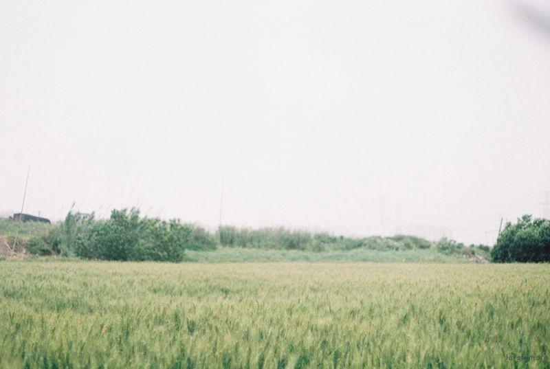 [ 胶 片 ] 麥田 · 少女 1-1