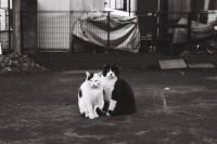 [11781] 猫 | Episode VII