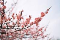 [12294] 春风十里