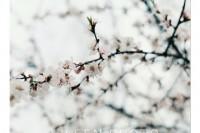 [11902] 饮不尽一场春色