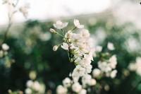[12335] 花满枝丫,在岁月无声里。