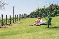 [12191] 红酒庄园 Vineyard