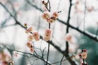 [12745] 立春.落雪