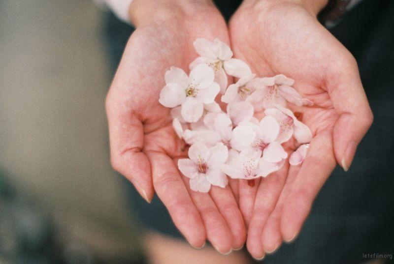 [ 胶 片 ] 桜色 · 咲く 5-1