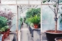 [12476] 温室里的花朵不知窗外的大雨倾盆