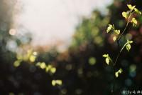 [12350] 莫辜负,好春光。胶片里的春天