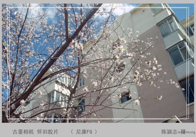 东北的春天