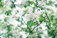 [12673] 春的诗