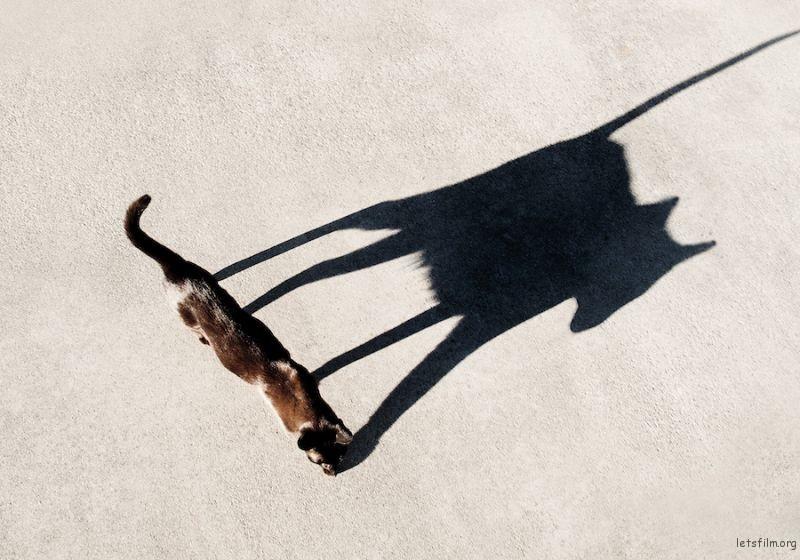 """Ninja Cat"" by Robert Couse-Baker"