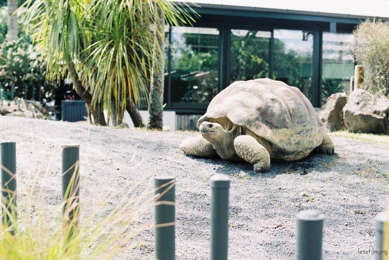 zoo (15)
