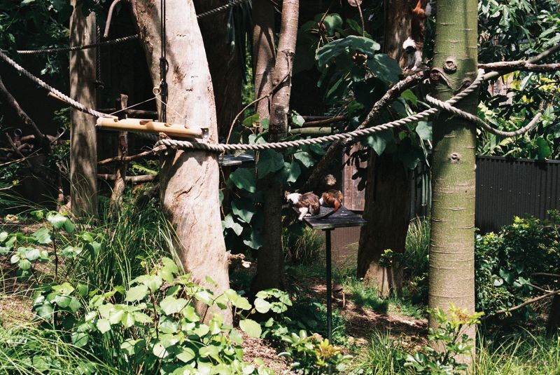 zoo (22)