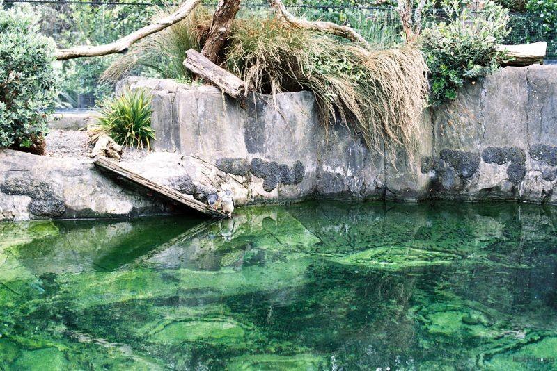 zoo (27)