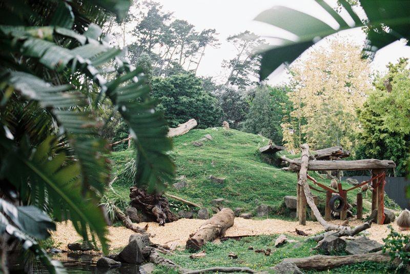 zoo (34)