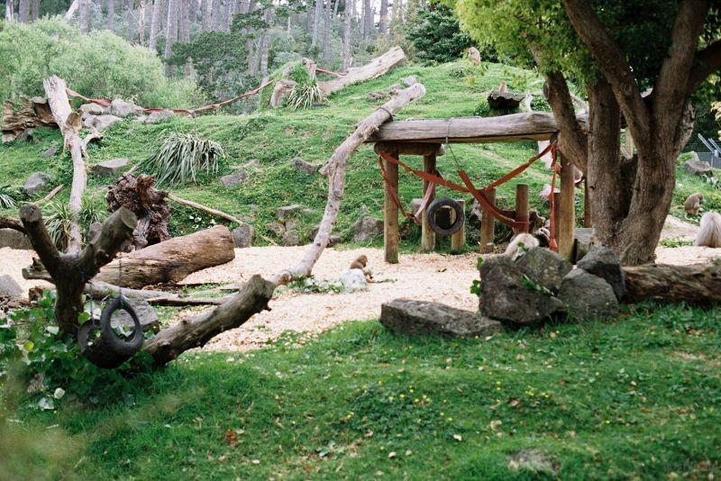 zoo (39)