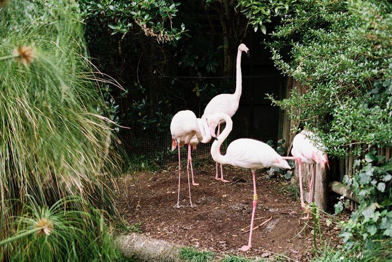 zoo (41)