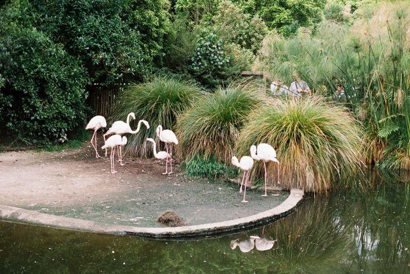 zoo (43)