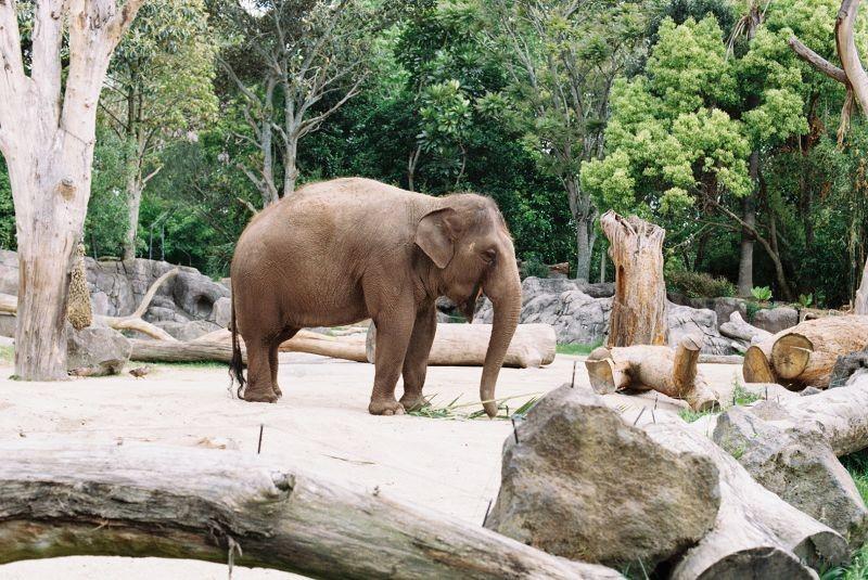zoo (44)