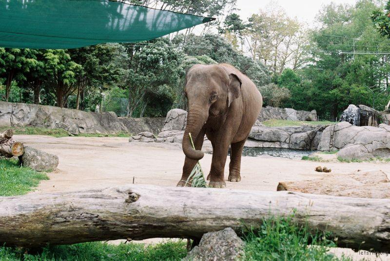 zoo (45)