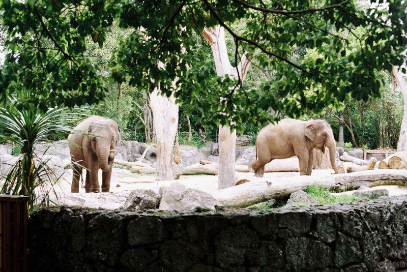 zoo (46)