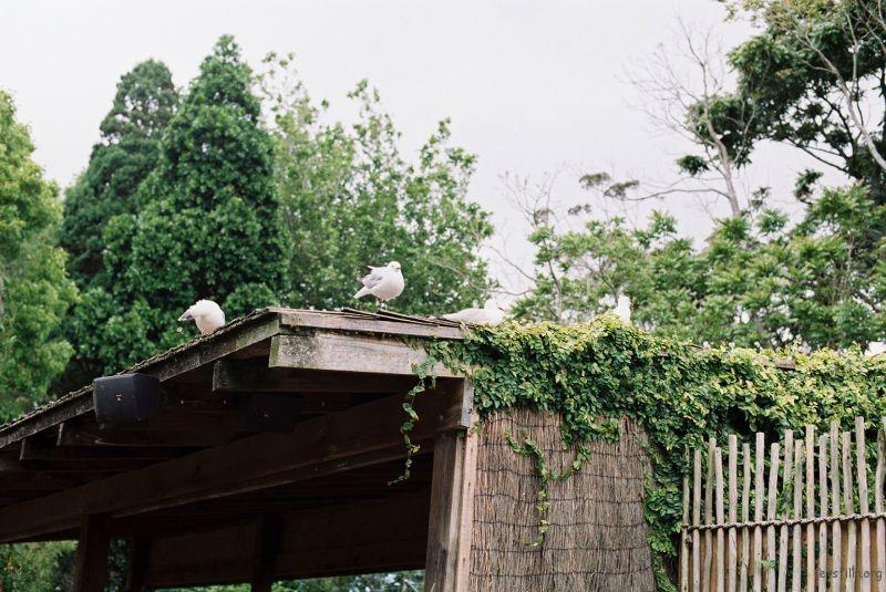 zoo (47)