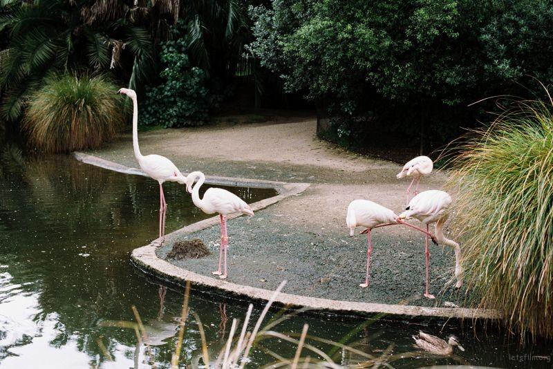 zoo (48)