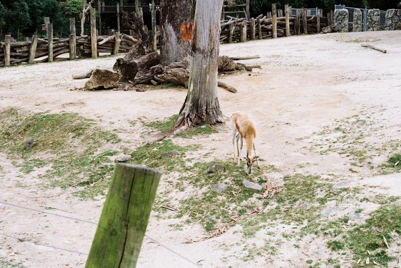 zoo (49)