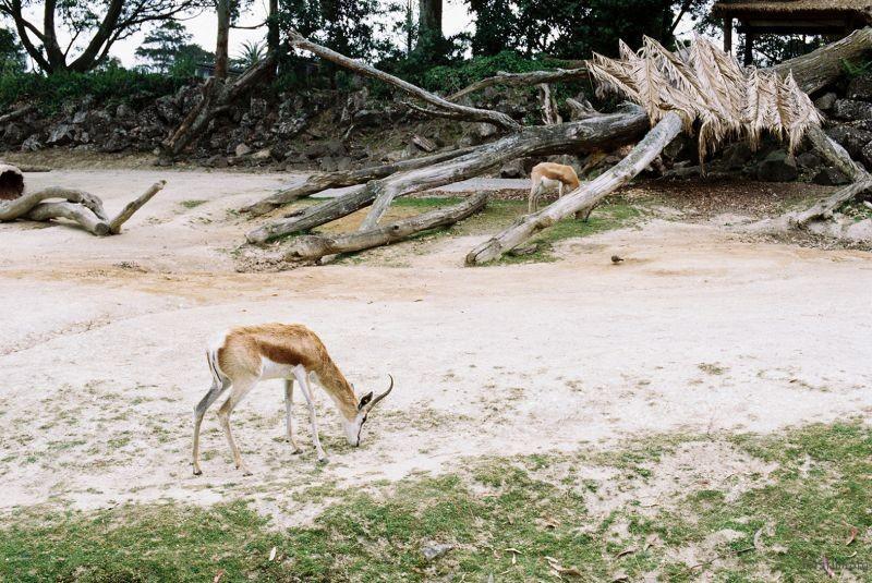 zoo (51)
