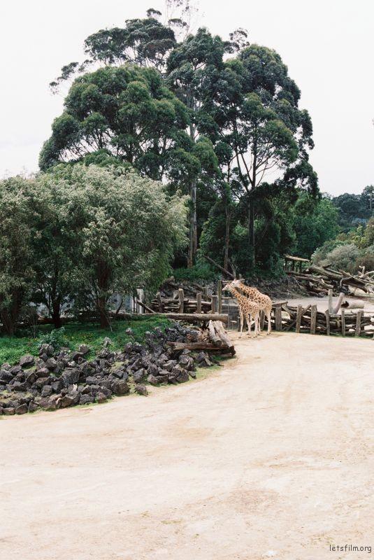 zoo (57)