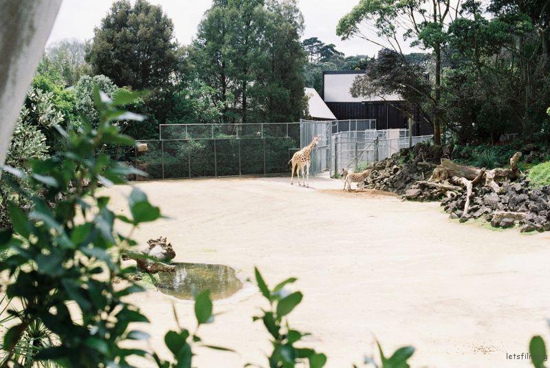 zoo (58)
