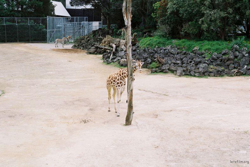 zoo (59)