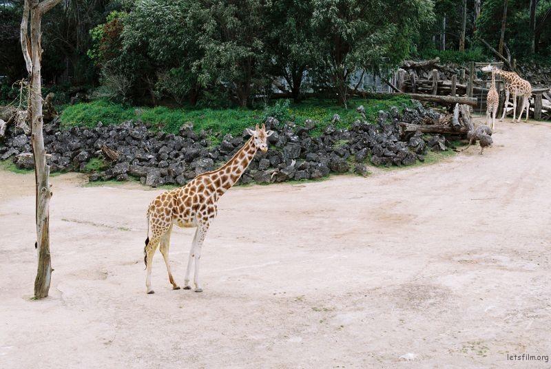 zoo (60)
