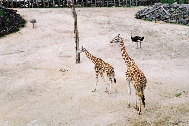 zoo (62)