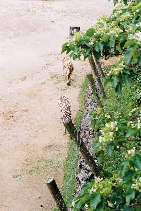 zoo (63)