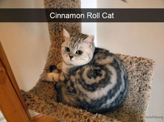 02-cats_make_the_best_snapchats