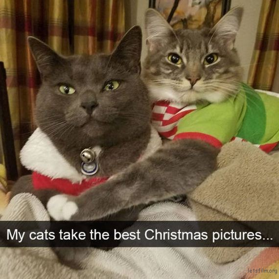 03-cats_make_the_best_snapchats