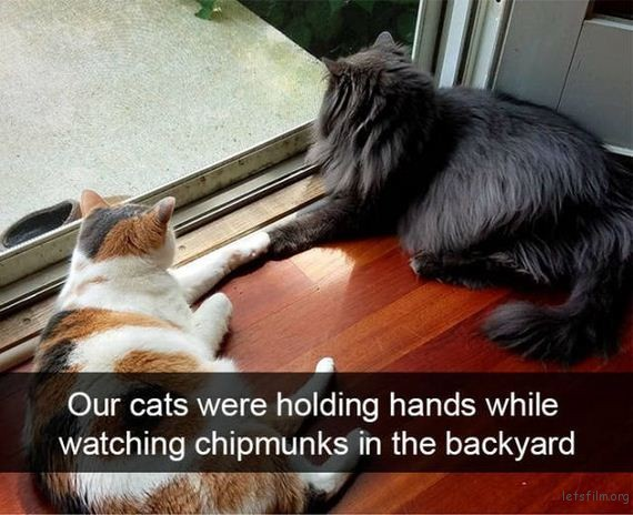 04-cats_make_the_best_snapchats