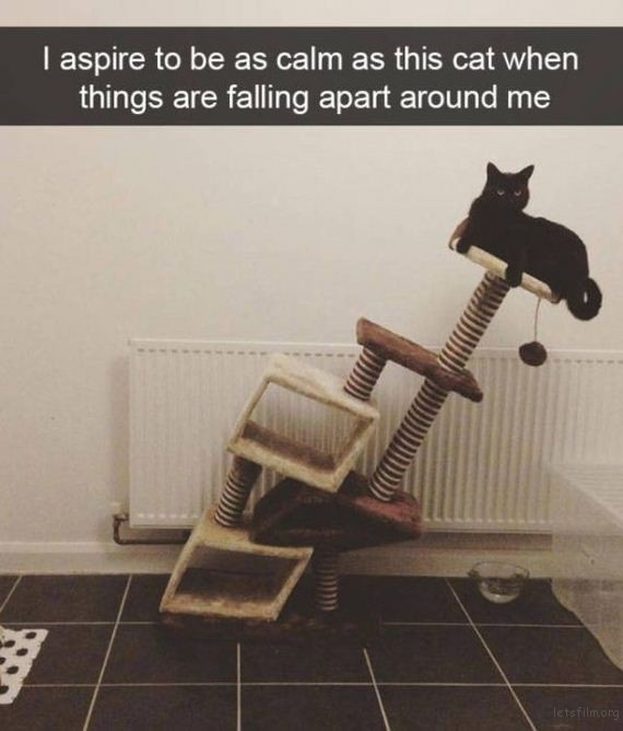 07-cats_make_the_best_snapchats