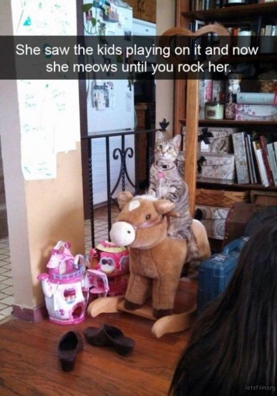 14-cats_make_the_best_snapchats