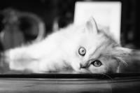 [13939] 家有奶猫,自冲自扫