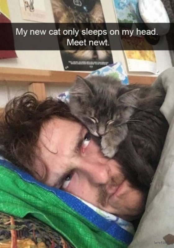 21-cats_make_the_best_snapchats