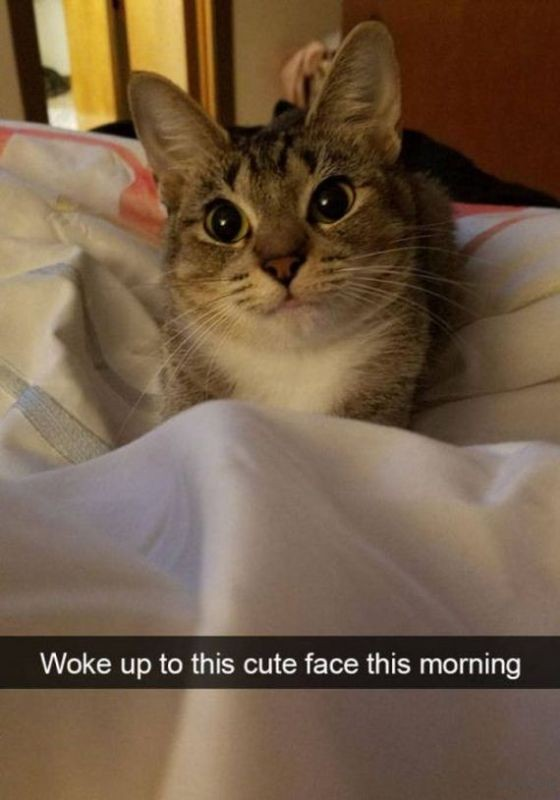 24-cats_make_the_best_snapchats
