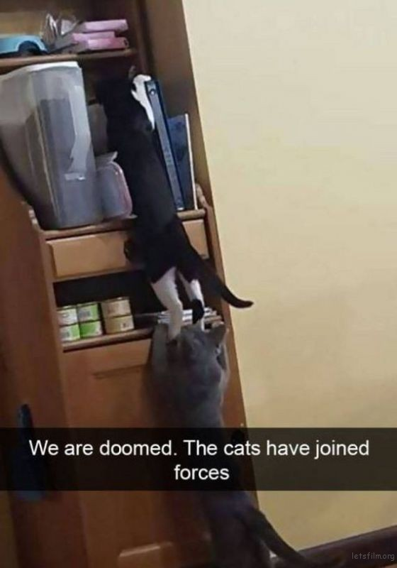 25-cats_make_the_best_snapchats