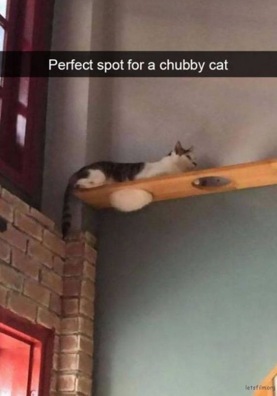 27-cats_make_the_best_snapchats