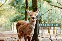 【奈良】鹿出没注意!避过原爆轰炸的古都奈良