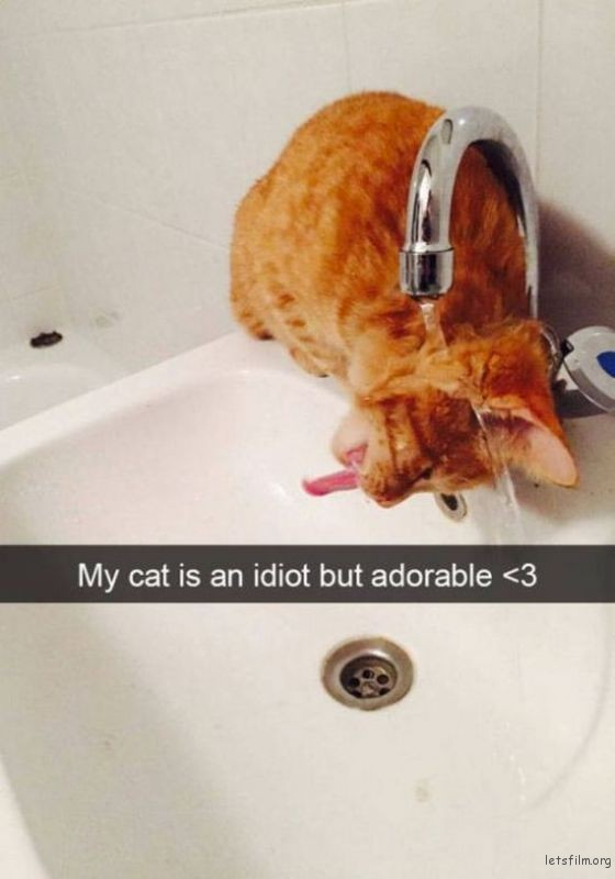 28-cats_make_the_best_snapchats