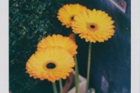 [14056] Flowers
